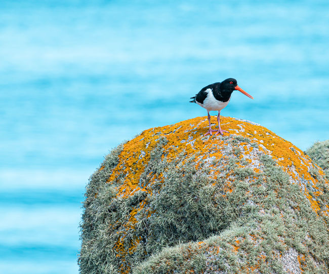 Bird perching on rock