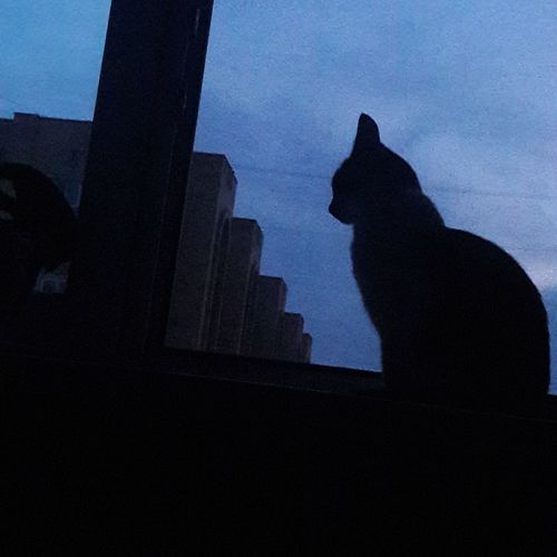 Low angle view of silhouette cat against sky
