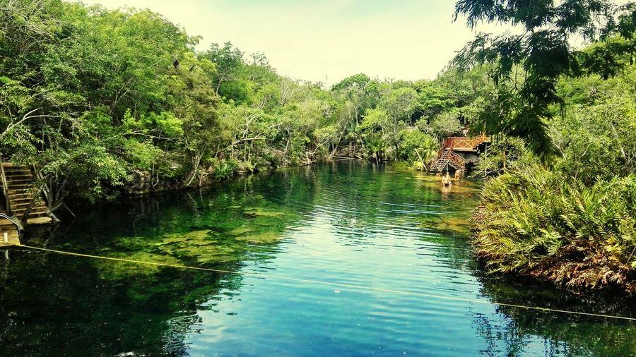 Cenote Jardín del Edén, Ruta Playa del Carmen-Tulum, Quintana Roo, Mx