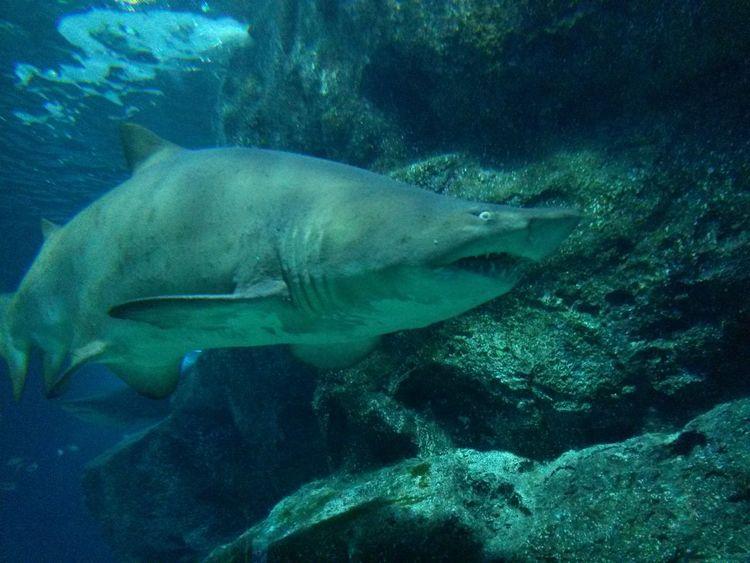shark attack Siam Ocean World