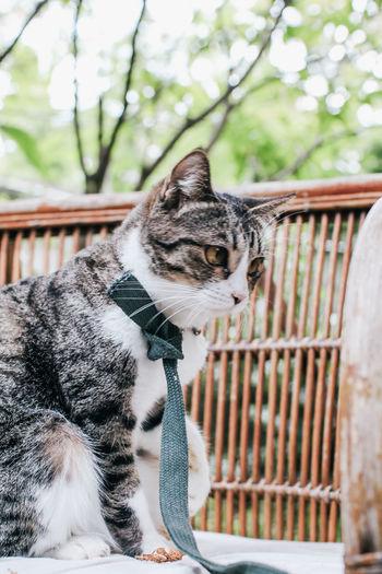Cat sitting on railing