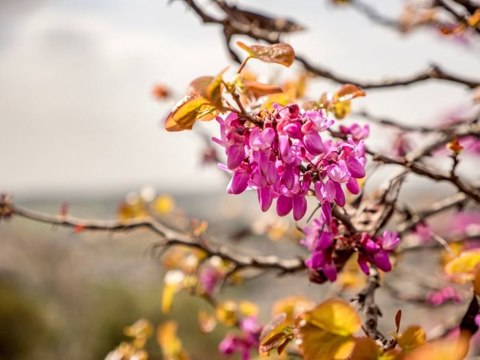 EyeEm Selects Flower Flowering Plant Plant Beauty In Nature Fragility Vulnerability  Growth Pink Color Close-up Tree Branch Blossom Focus On Foreground Springtime Nature Flower Head