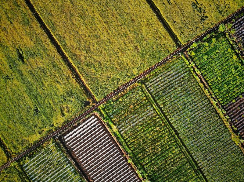 EyeEm Selects EyeEm Gallery Landscape Outdoors Aerial Photography EyeEm Best Shots Eyeemphotography Business Rural Scene Backgrounds Agriculture Full Frame Pattern Field Aerial View High Angle View Farm Cultivated Land Patchwork Landscape Rice Paddy Terraced Field Plantation Agricultural Field Vineyard Rice - Cereal Plant Cultivated Ear Of Wheat Farmland Crop  Asian Style Conical Hat