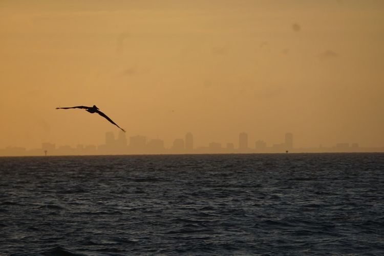 Birds Flying Over Sea In City Against Sky