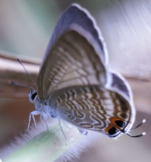 Butterfly Animal Macro Animal Wildlife Close-up Insect Selective Focus Butterfly - Insect Zoology Outdoors Animals In The Wild One Animal