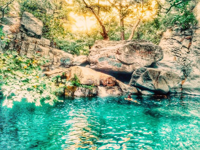Water Forest Tree Scenics Rock - Object Tranquil Scene Tranquility Beauty In Nature Non-urban Scene Nature Waterfront Tree Trunk Rock Formation Travel Destinations Tourism Branch Day WoodLand Cliff Non Urban Scene