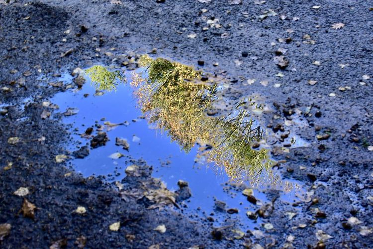 Water Nature No People High Angle View Day Full Frame Outdoors Rock Puddle Backgrounds Mud Dirt Close-up Textured  Growth Wet Environment Rock - Object Environmental Issues Pollution Swamp