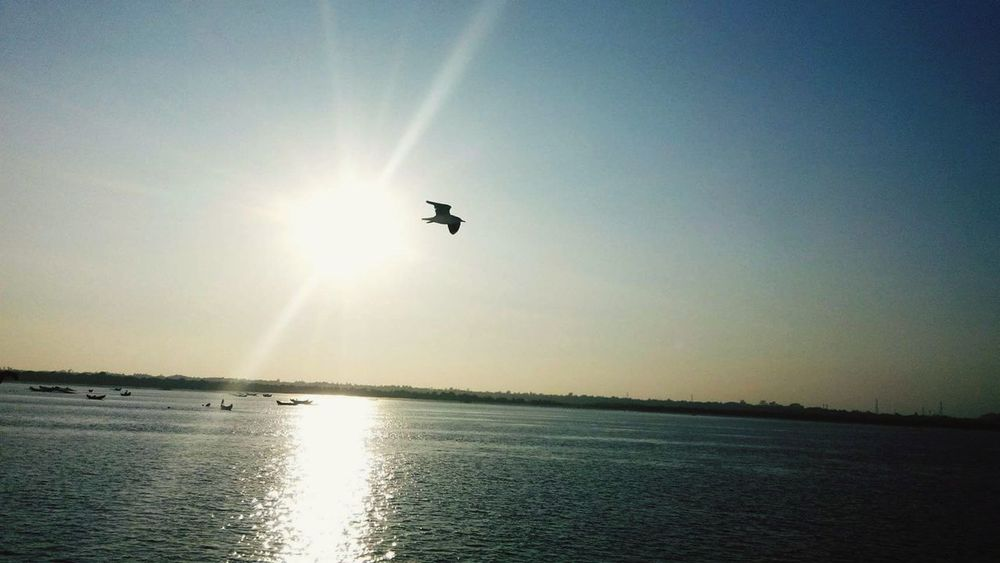 Quick Snap!!! Sun Mid-air Flying Sunset Outdoors Sunlight Nature Water Sky Day Beauty In Nature Sea Clear Sky Scenics No People Seagull Reflection Waterreflections  Nature Beauty In Nature Motion Photography Bangladesh 🇧🇩 EyeEmNewHere The Week On EyeEm