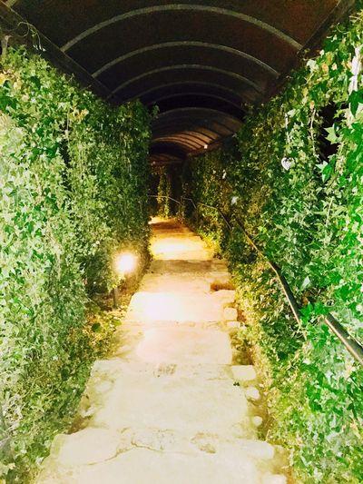 La vera moralità consiste non già nel seguire il sentiero battuto, ma nel trovare la propria strada e seguirla coraggiosamente. (Mahatma Gandhi ) Theway Nature Parole Sagge Messner Beautygreen