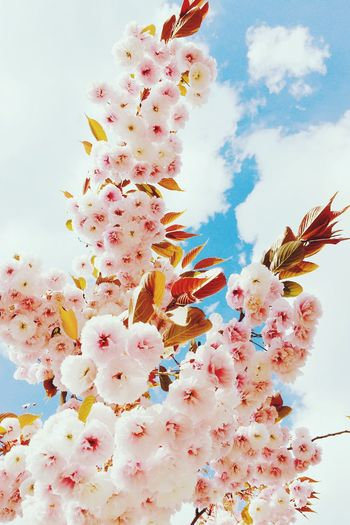 Spring Has Arrived Almond Blossom Blossom Sky Nature EyeEm Nature Lover My Fuckin Berlin VSCO Highkey