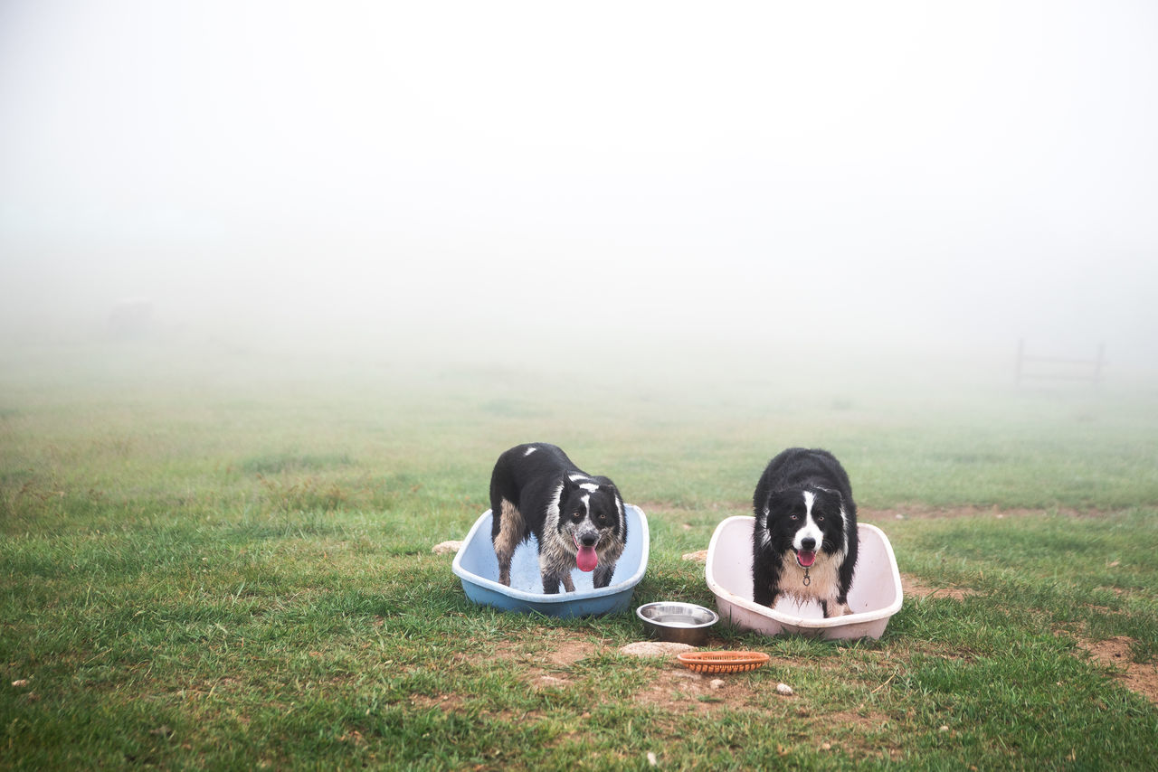 Dogs standing in bathtubs at yard