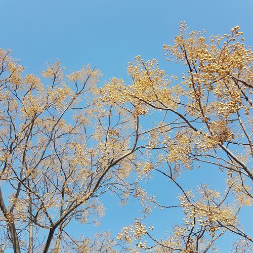 Low angle view of flowering plants against clear blue sky