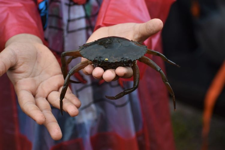 Close-up of hand holding crab