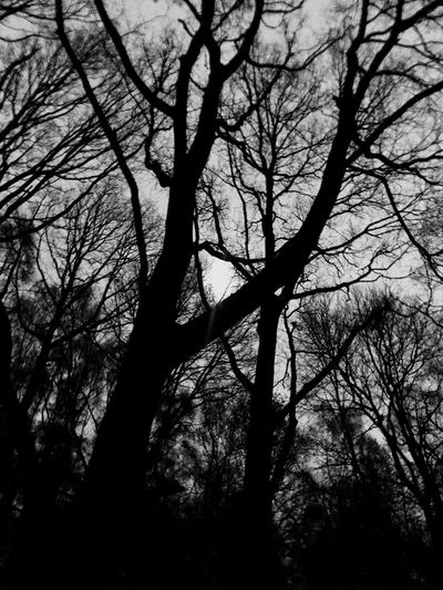 The moon shining between the bare branches. Moonlight Moon Alone Eerie Intimidating Surrealism Atmospheric Blackandwhite Bare Tree Tree Plant Branch Silhouette Low Angle View Trunk Tree Trunk Nature Sky Growth Tranquility Tranquil Scene No People Beauty In Nature Outdoors Day Forest Backgrounds Full Frame Land
