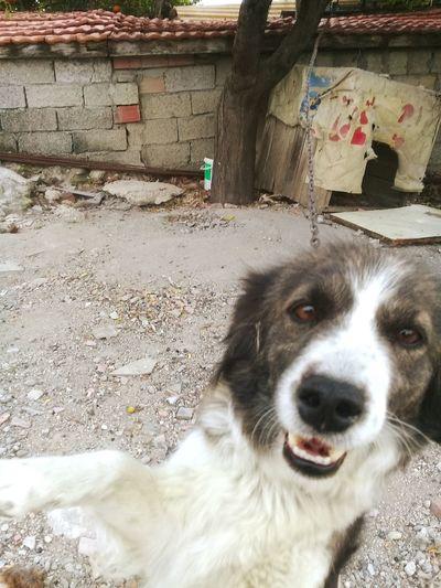Pets Dog One Animal Animal Themes Selfie Time Selfie✌ Selfie Portrait
