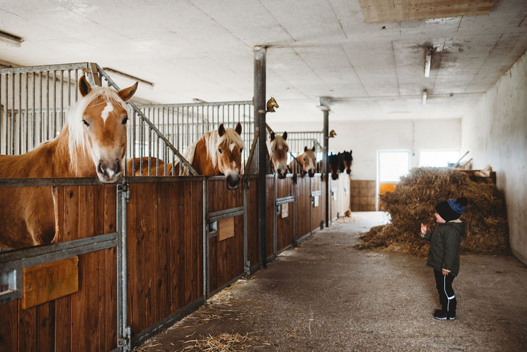 Rear view of women standing in stable