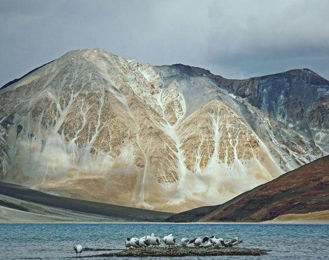 Black-Headed Gulls On Rock Amidst Sea Against Mountains
