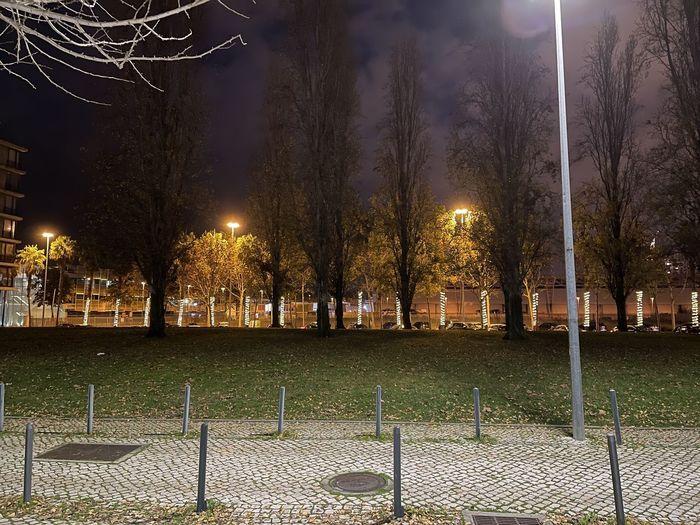 Illuminated street by trees at park against sky at night