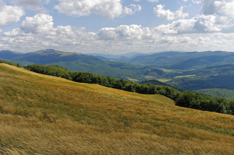View on Tarnica mountain. Połonina Caryńska Wołosate Beauty In Nature Bieszczady Day Field Grass Green Color Growth Landscape Mountain Mountain Range Nature No People Outdoors Scenics Sky Tranquil Scene Tranquility