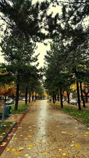 Korce Albanian Beauty Nature Outdoors Day Wet Beauty In Nature No People Autumn Autumn Leaves Autumn Colors Leaf Nature Autumnbeauty Taking Photos
