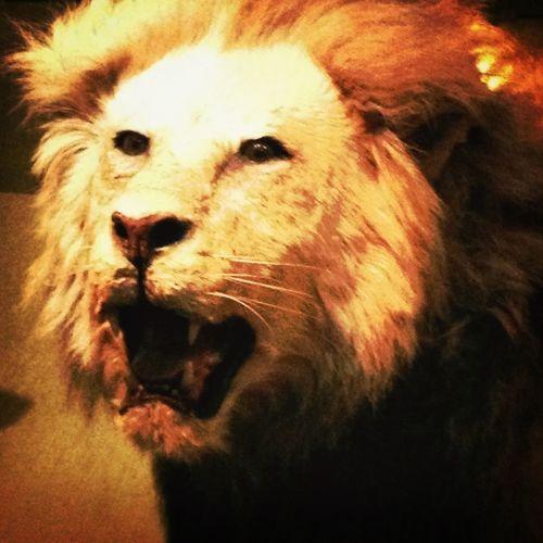 El rey de la selva...