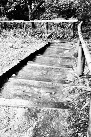 Steps Bamboo Handrail Tonogayato Garden Tokyonature Urban Nature Tokyo Japan Bnw Bnw_collection Bnwphotography Bnw_captures Travel Photography