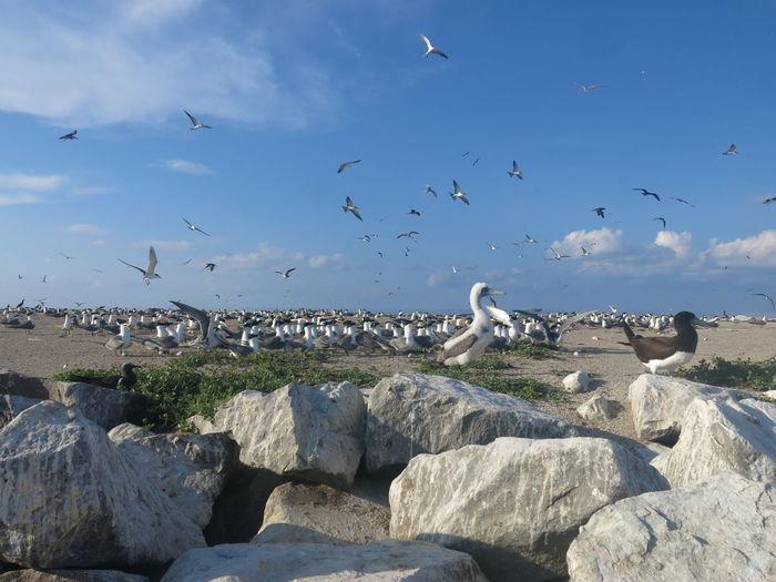 Seagulls flying over rocks against sky