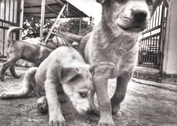 Puppy Puppy❤ Puppylove 😘😍🐶 Monochrome Photography Blackandwhite Photography Eyeempuppylove EyeEm Animal Lover