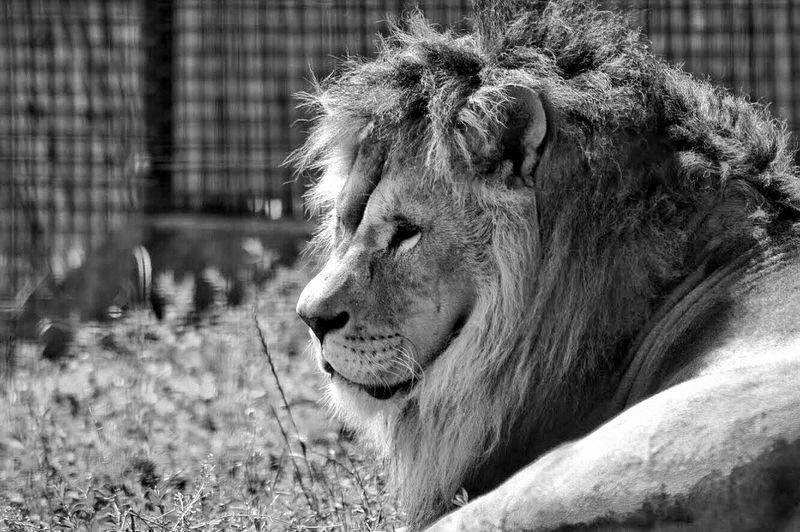 King Wildlife &