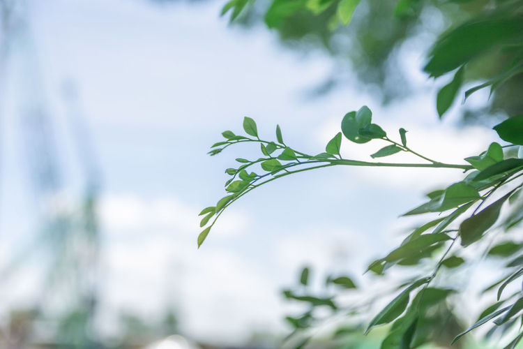 Plant Plant Part Leaf Growth Green Color Focus On Foreground Nature Close-up Day No People Beauty In Nature Low Angle View Outdoors Selective Focus Freshness Sky Fragility Vulnerability  Tree Tranquility