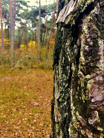 Tree Trunk Beauty In Nature Outdoors Tranquility First Eyeem Photo