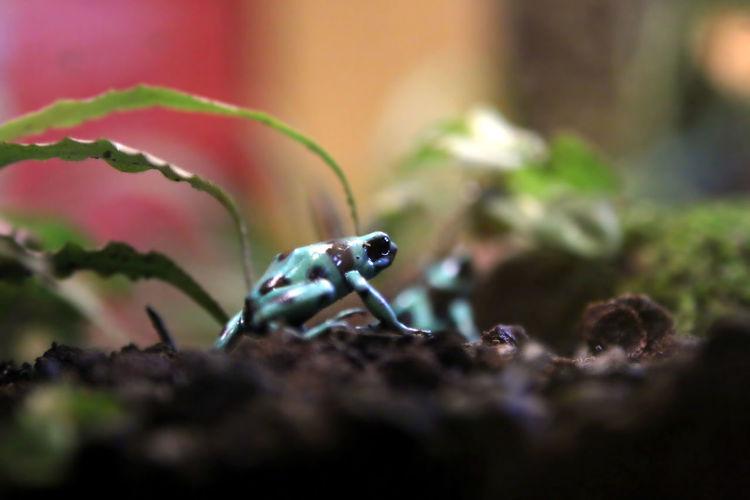 Frog at Shedd