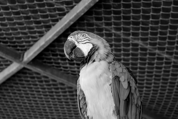 Animal Themes Animals Bird Bird Photography Birdwatching Black & White Black And White Blackandwhite Blackandwhite Photography Bnw Eye4photography  EyeEm Best Shots EyeEm Bnw EyeEmBestPics