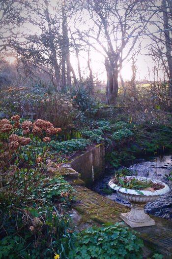 Edwardian Architecture Edwardian Garden Photography Garden Love Eerie Beautiful Stream - Flowing Water Brambles Water Trees Meadows And Fields Garden Ornament