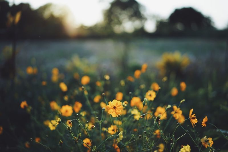 Plant Flowering Plant Flower Growth Fragility Focus On Foreground Vulnerability  Close-up Field Yellow Flower Head Water Land No People Freshness Beauty In Nature Nature Selective Focus Day Outdoors