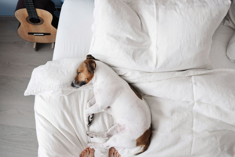 High angle view of dog sleeping on bed at home