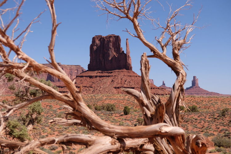 Dead tree against clear sky