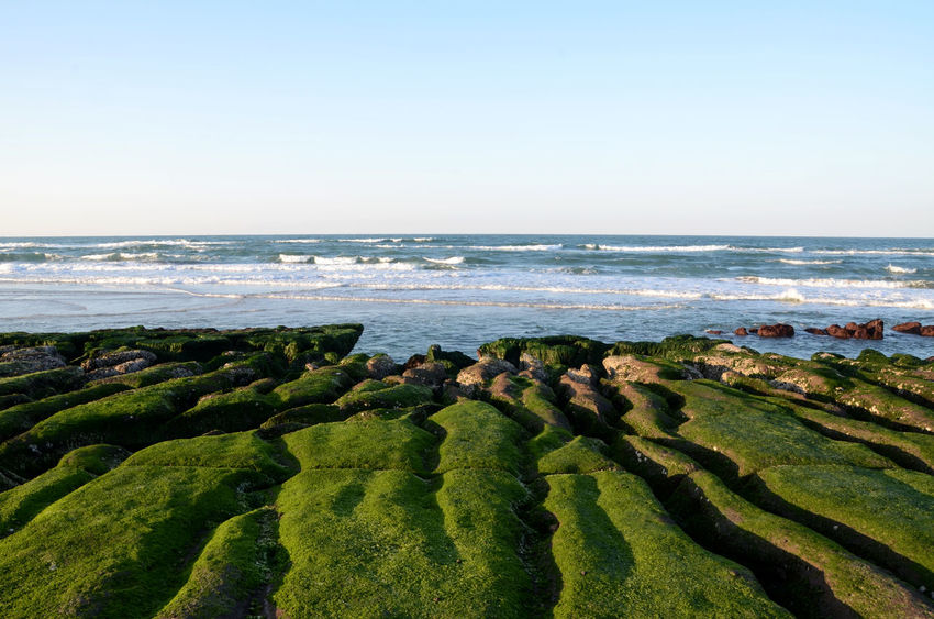 Beach Beauty In Nature City Cityscape Clear Sky Day Grass Green Color Horizon Horizon Over Water Landscape Nature No People Outdoors Scenics Sea Sky Tranquility Travel Destinations Vacations Water Wave 台灣 老梅石槽