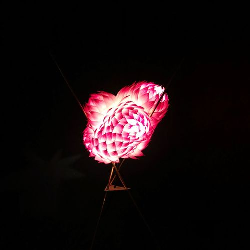 Just an artichoke lamp Light And Shadow Light Lamp Flower Fragility Red