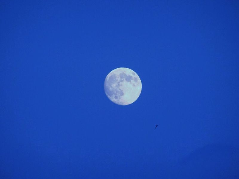 Moon Blue Moon Surface Full Moon Planetary Moon Sommergefühle First Eyeem Photo Copy Space Astronomy Half Moon Nature Clear Sky Beauty In Nature Tranquil Scene Night Scenics Tranquility Space No People Crescent Outdoors