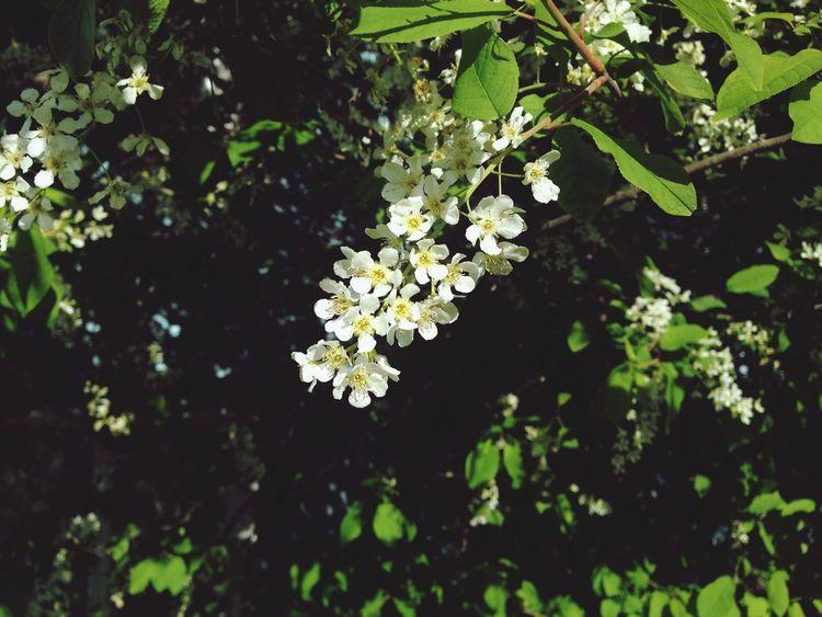 Hello World Summer Bird Cherry Tree Sunny Day Good Day