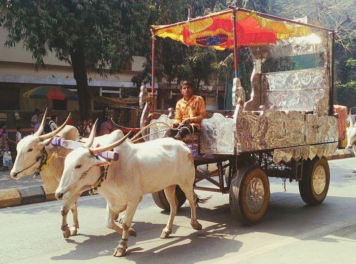 My joy, my rideUp Close Street Photography Mobileclickpic Nexus5 Edit Mumbailocal