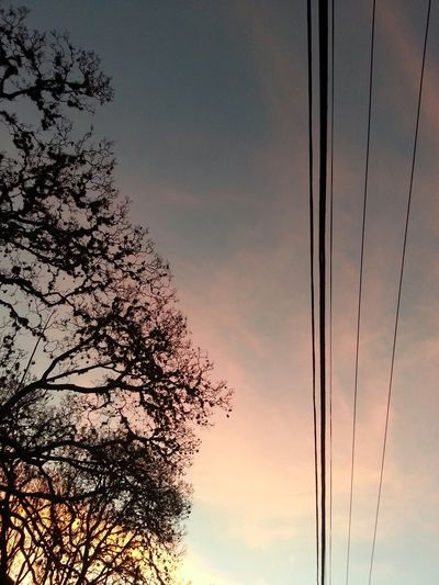 Morelia, sky, no filter, colors, tree