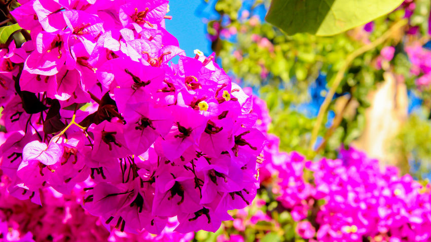 Summer Flowers Pink Spring Nature Hd Photo Beautiful Nature