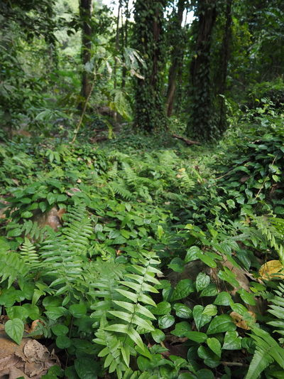 Close-up of fern amidst trees in forest