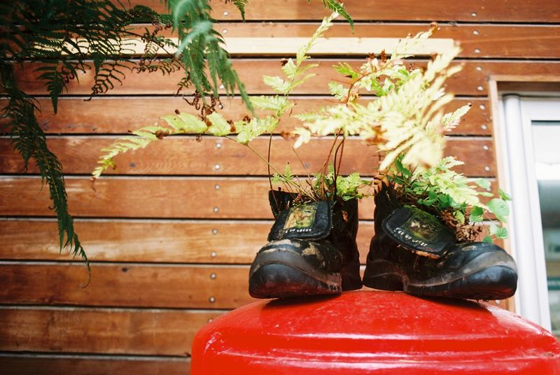 These Boots Were Made For Planting Building Exterior Growth Nature Plant Planting Post Box  Shoe Upcycling Walking Boots Weathering Art Is Everywhere Break The Mold Live For The Story My Best Travel Photo A New Beginning