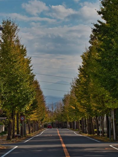 Avenue of ginkgo trees. Simple Quiet Love Sunlight Japan Shizuoka M.ZUIKO DIGITAL Lumix G9 EyeEm Nature Lover EyeEmNewHere EyeEm Best Shots Green Color Sky And Clouds Sky Autumn Tranquil Scene Tranquility No People Day Outdoors Yellow The Way Forward Road Tree Beauty In Nature Nature