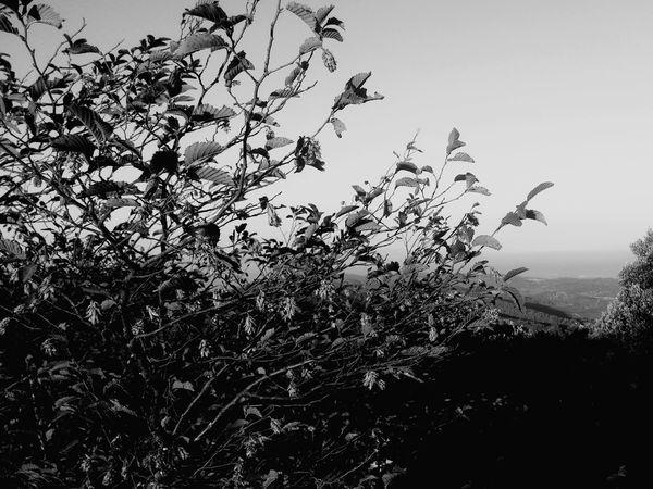 Three Eye Follow4follow Croatia No Days Off Freestyle EyeEm EyeEmBestPics EyeEmbestshots Like ? ❤ Eye4photography  EyeEm Best Shots - Black + White EyeEm Nature Lover Nice Day EyeEm Best Shots Relaxing Beautiful Nature Photography Animals Nature Colour Of Life Followforfollow Must See Flower Flowers
