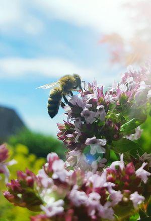 Lieblingsmotiv 😊 Hello World Enjoying Life Beekeeping Bienen  Imker Beekeeper HoneyBee Honigbiene Summer Bee Sommer Lebensraum Nature Natur Imkerei