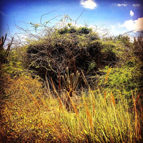 Puerto Rico Outdoor Photography Cactus
